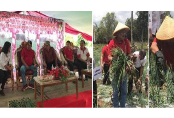 Gubernur Olly Dondokambey Panen Bawang Merah di Minahasa