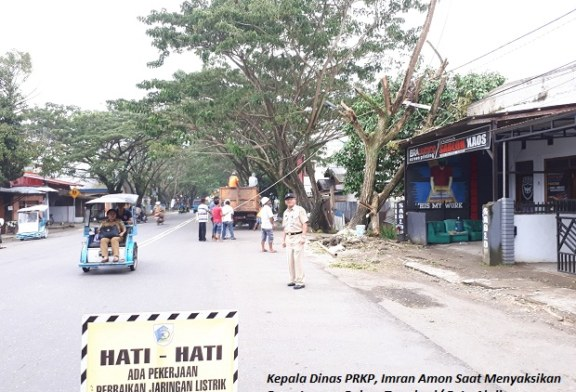 Dapat Surat Dari Masyarakat, Dinas PRKP Pangkas Pohon Trambesi Jalur Adampe Dolot