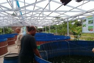 Pertama Di Kotamobagu, Budidaya Lele Sangkuriang Dengan Sistem Bioflog
