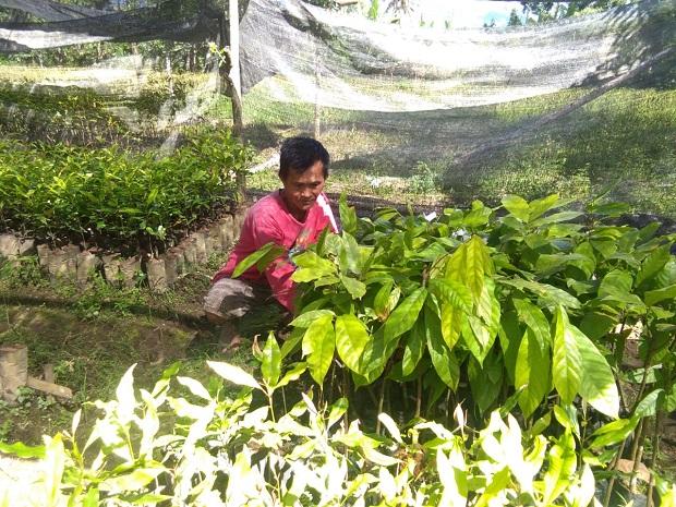 Pensiunan PNS Ini Tekuni Bisnis Pembibitan Pertanian