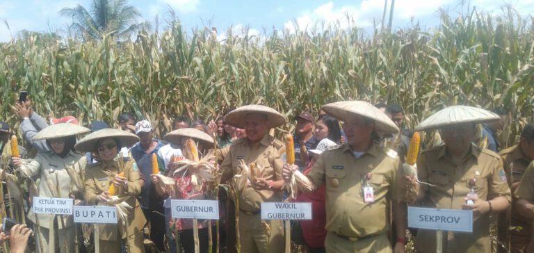 Di Bolmong, ODSK Panen Padi dan Bantu para Petani